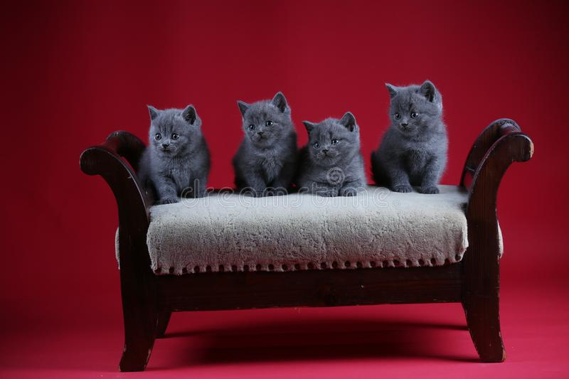 Kittens sitting on a vintage stool, wooden background royalty free stock photo