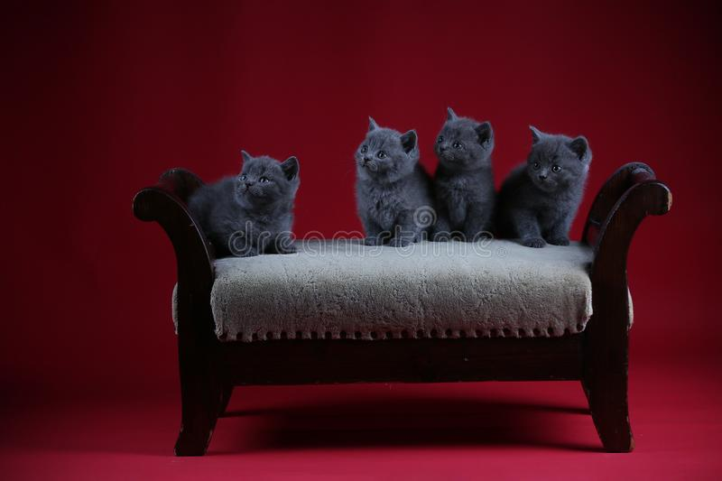 Kittens sitting on a vintage stool, wooden background royalty free stock photos