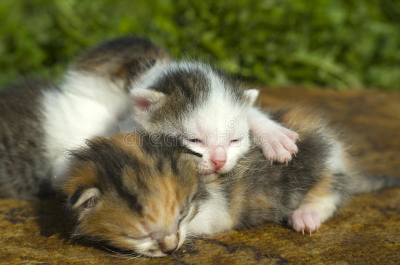 Download Kittens sleep stock image. Image of curious, family, eyes - 24747805