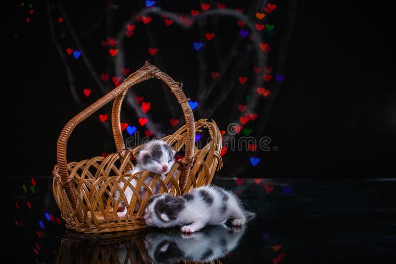 kittens sleep on a mirror surface stock images
