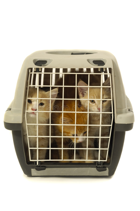 Kittens in transport box on white background royalty free stock photo