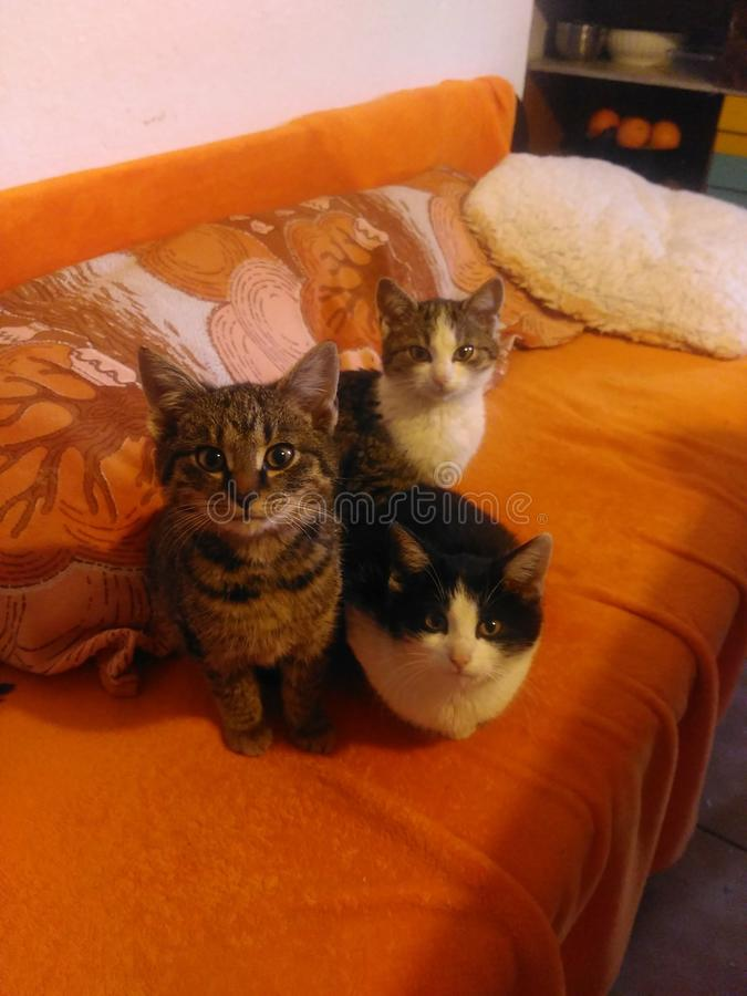 3 kittes i badroom arkivbild