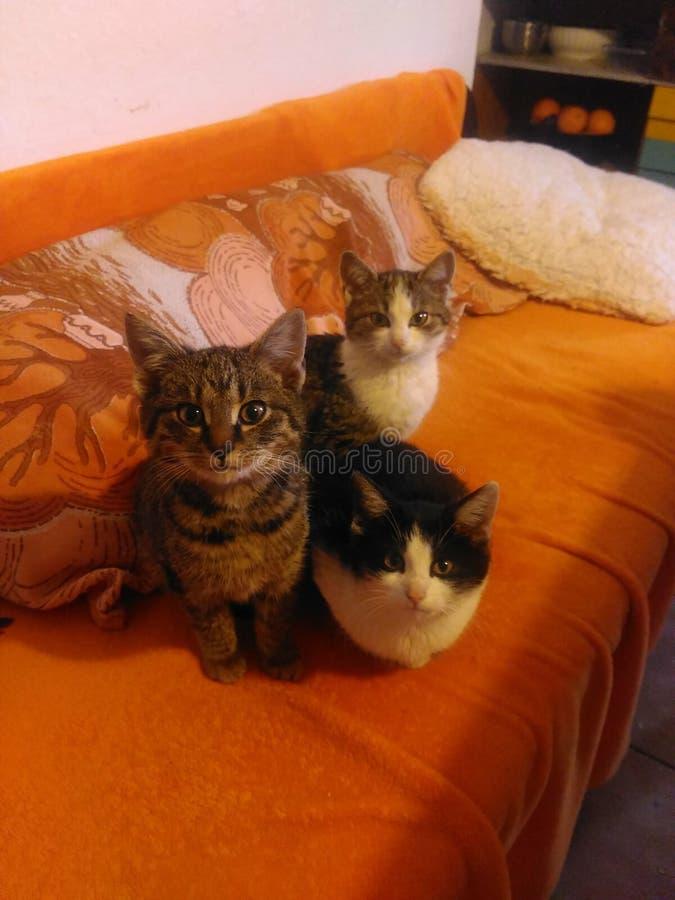 3 kittes no badroom fotografia de stock