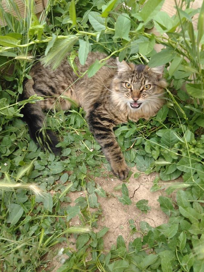 kittie image libre de droits