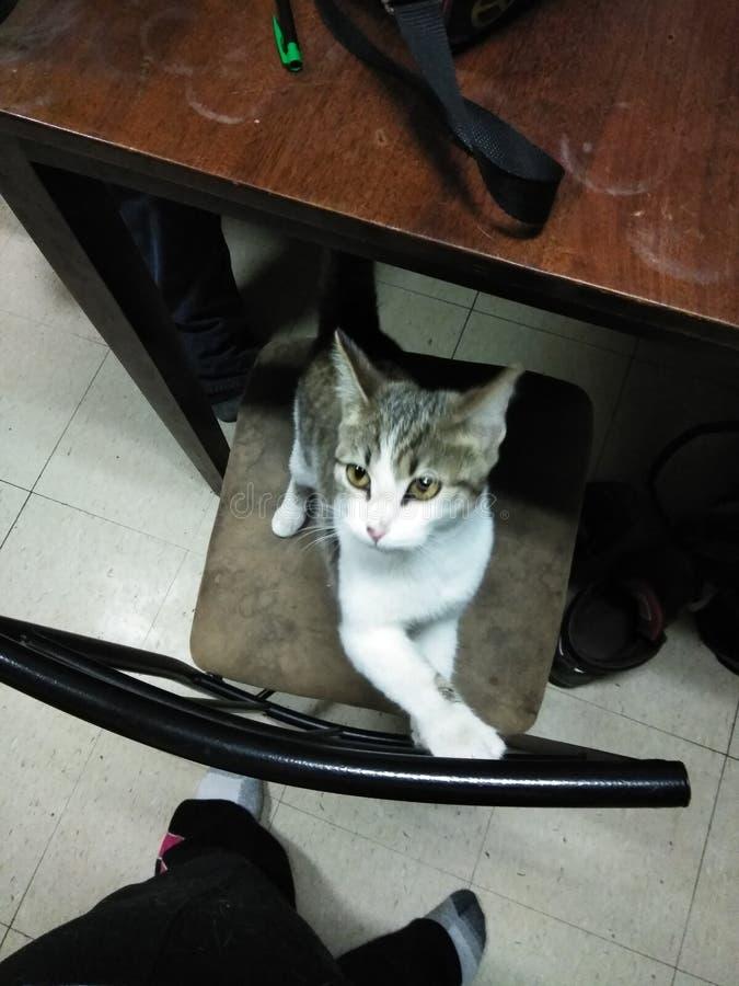kittie photo stock