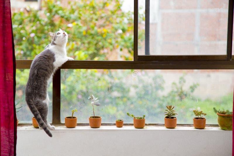 kittie photographie stock libre de droits