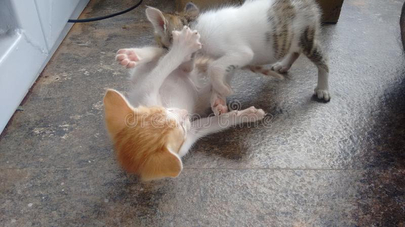 kitties stock foto