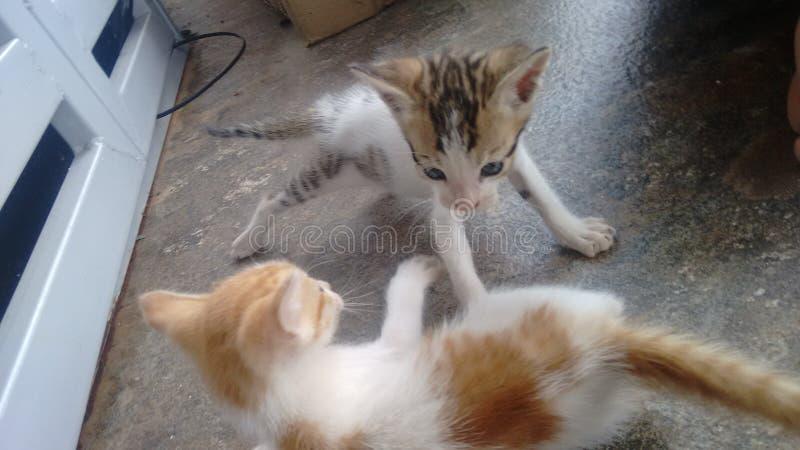kitties royalty-vrije stock fotografie
