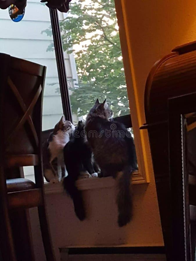 Kitties royalty free stock photo
