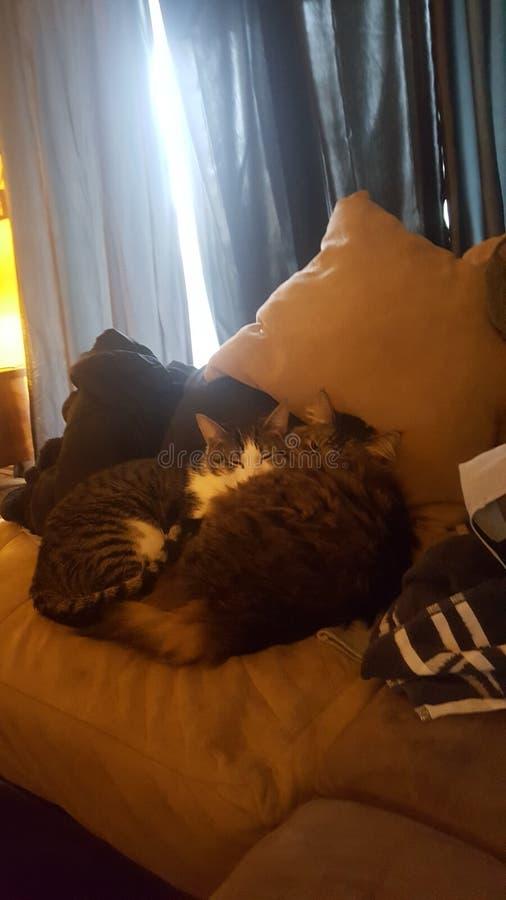 Kitties royalty free stock image
