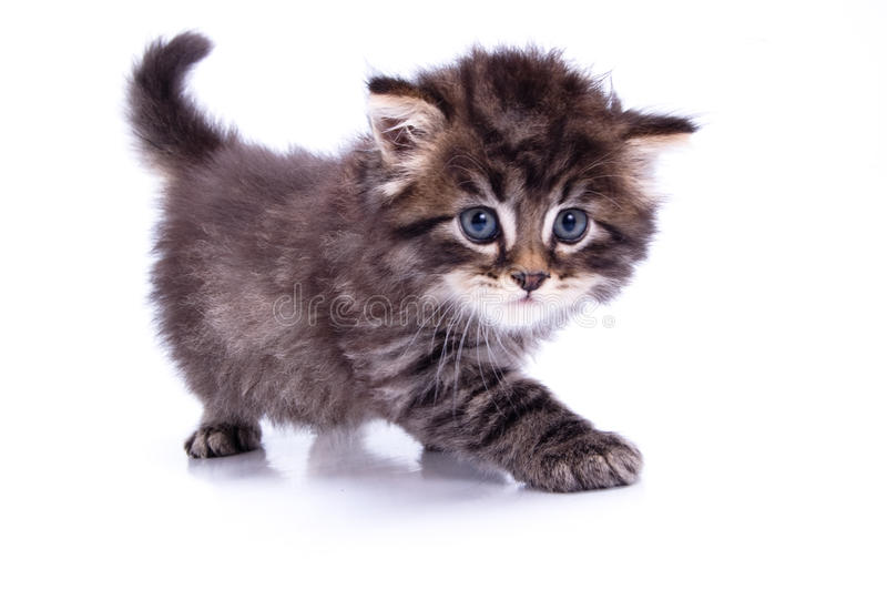 Kitty. A funny kitty on white isolated background stock photo