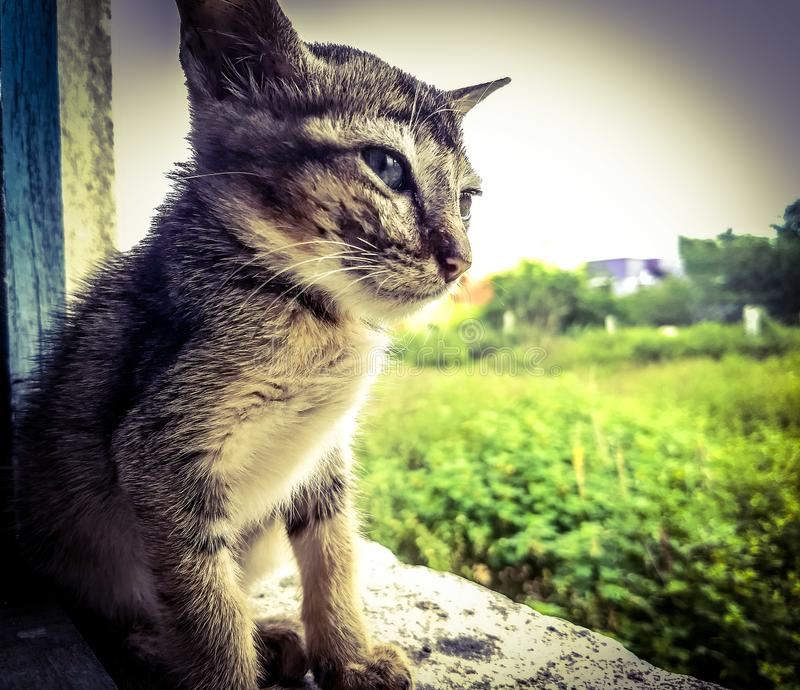 kitty stockfoto