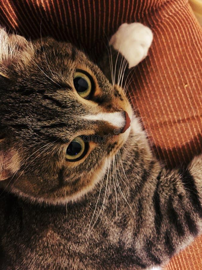 kitty stock foto