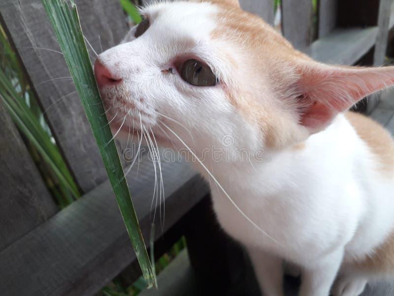 kitty photos libres de droits