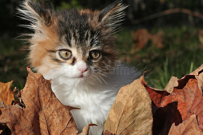 Download Kitty Royalty Free Stock Photo - Image: 12315035