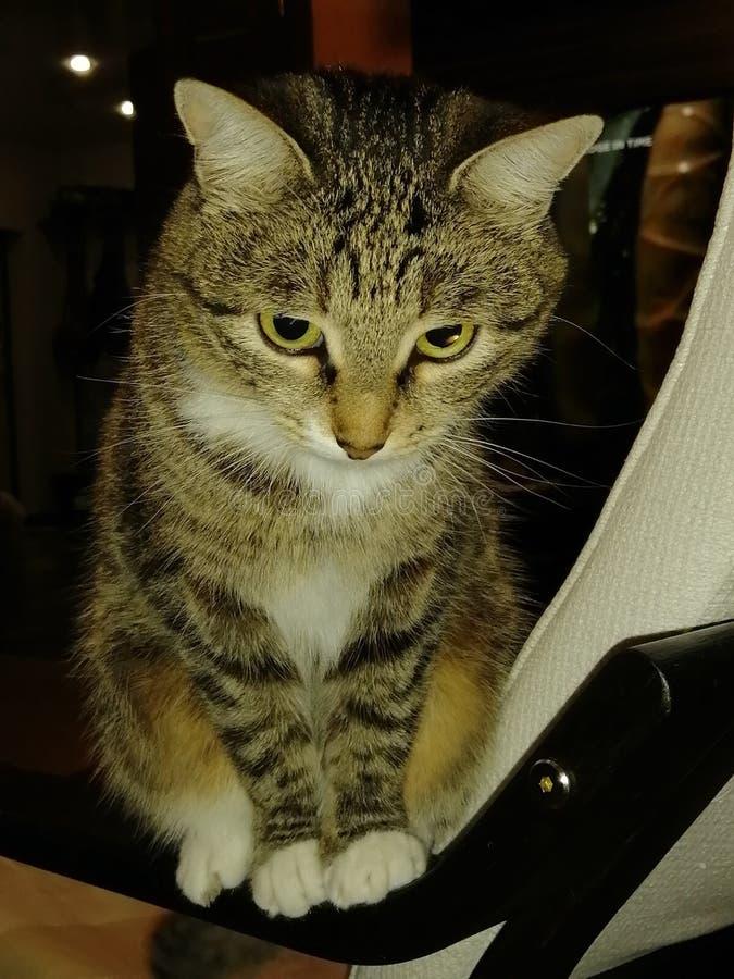 Kitty stockbild