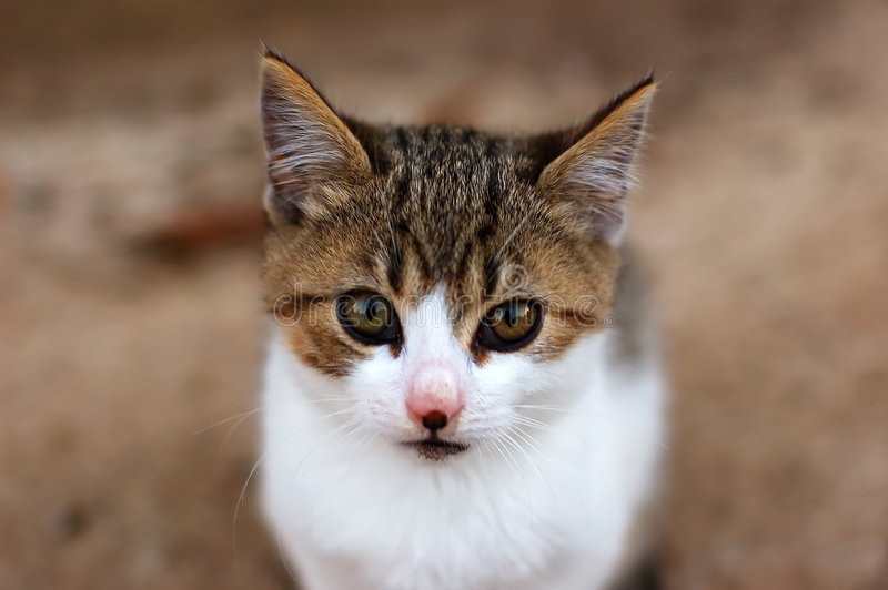 Download Kitty stock image. Image of content, cute, pretty, face - 1717765
