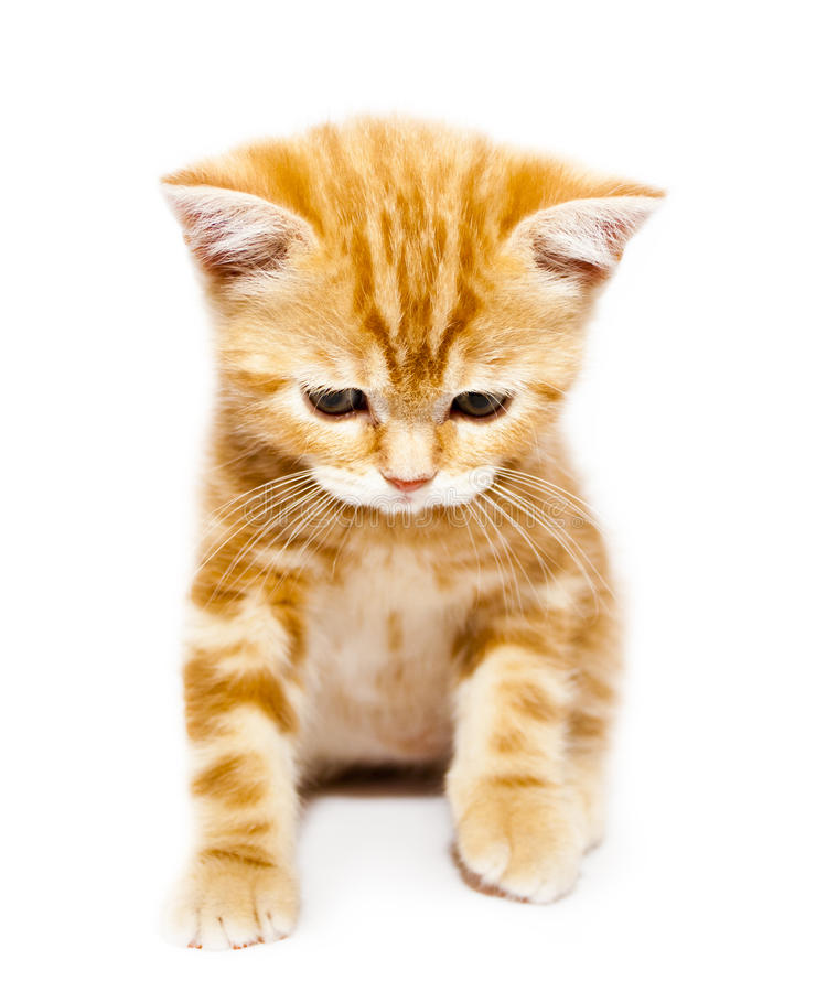 Free Kitty Stock Images - 19160144