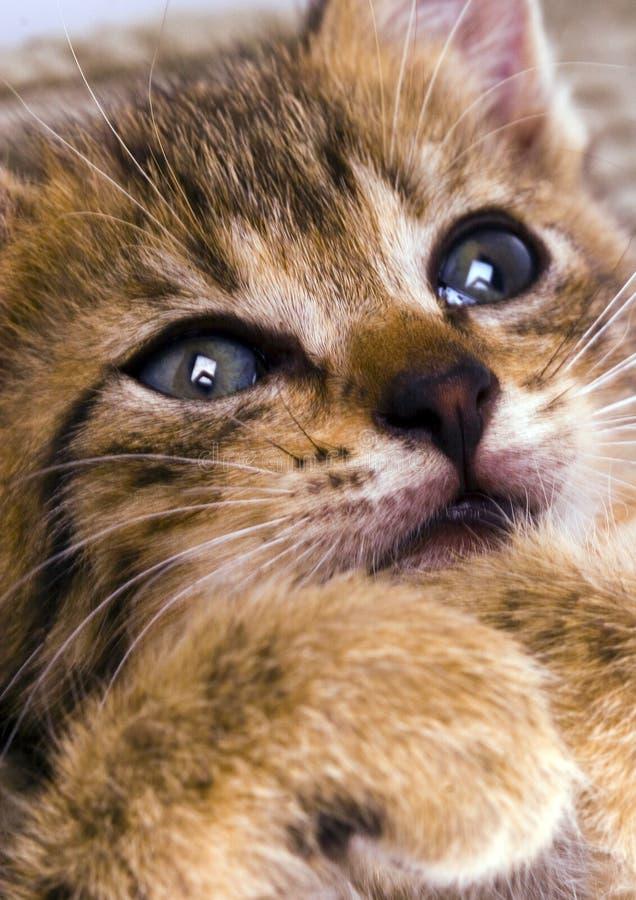 kitty zdjęcia stock