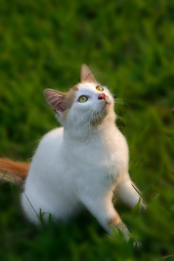 kitty, fotografia stock