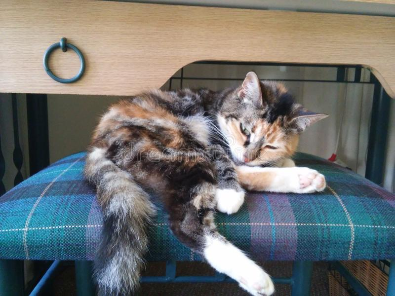 kitty photos stock