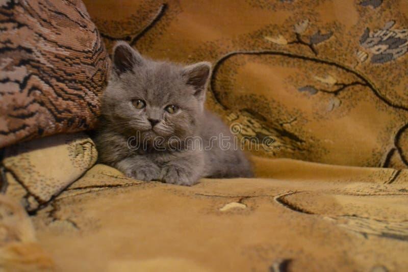 kitty imagem de stock royalty free