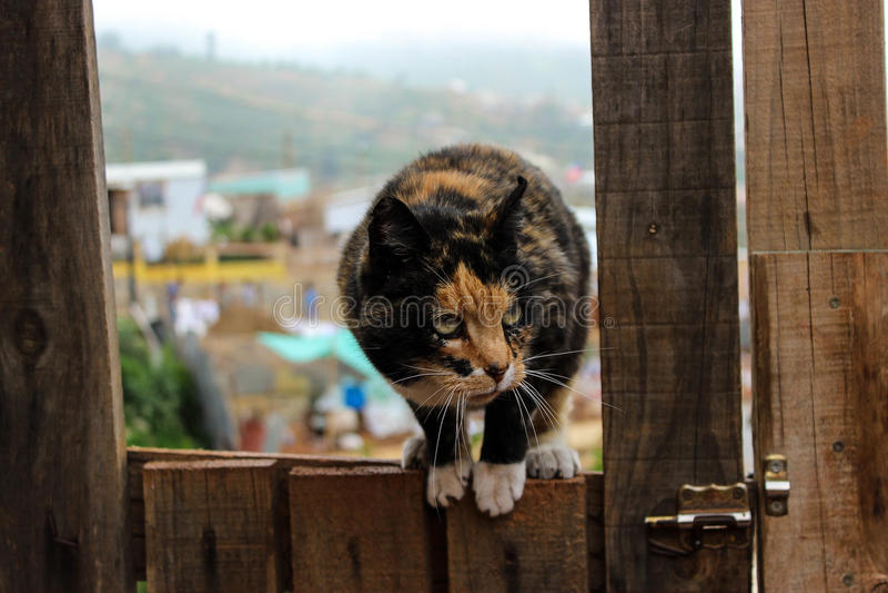 kitty fotografia de stock