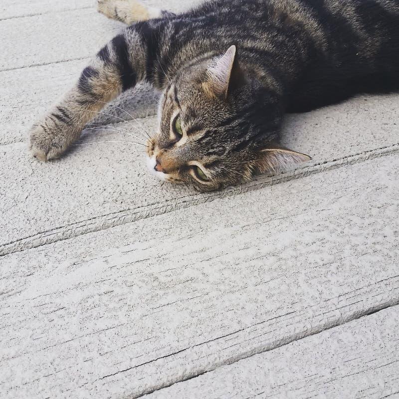 kitty fotografie stock libere da diritti