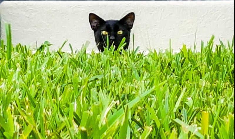 kitty fotos de stock
