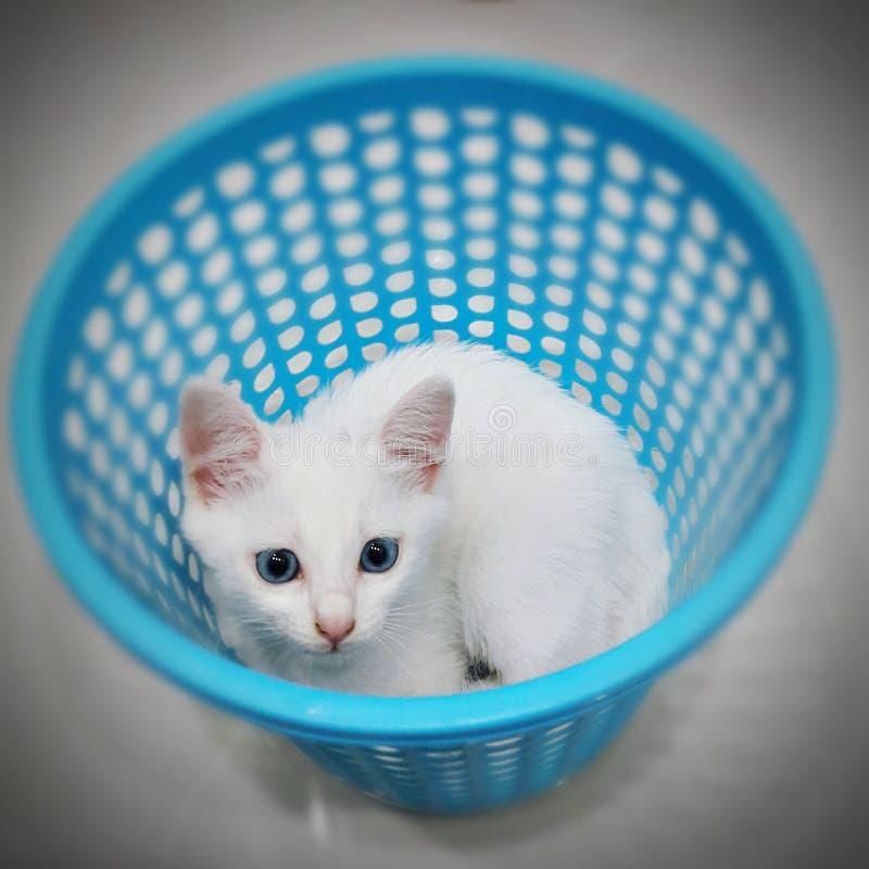 kitty photographie stock libre de droits