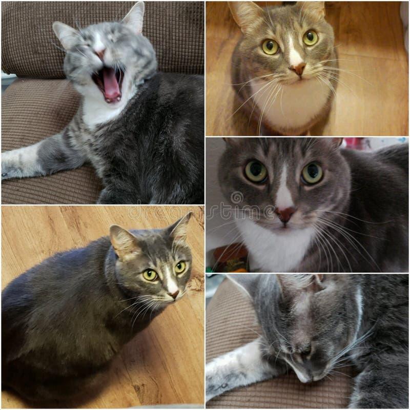 Kitty affronta fotografie stock libere da diritti