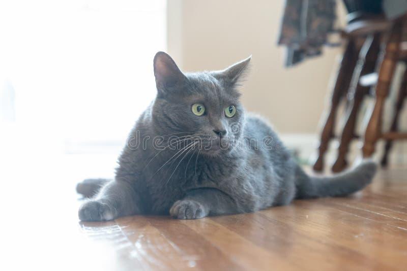 Kitty all'interno del raggio di sole fotografia stock libera da diritti