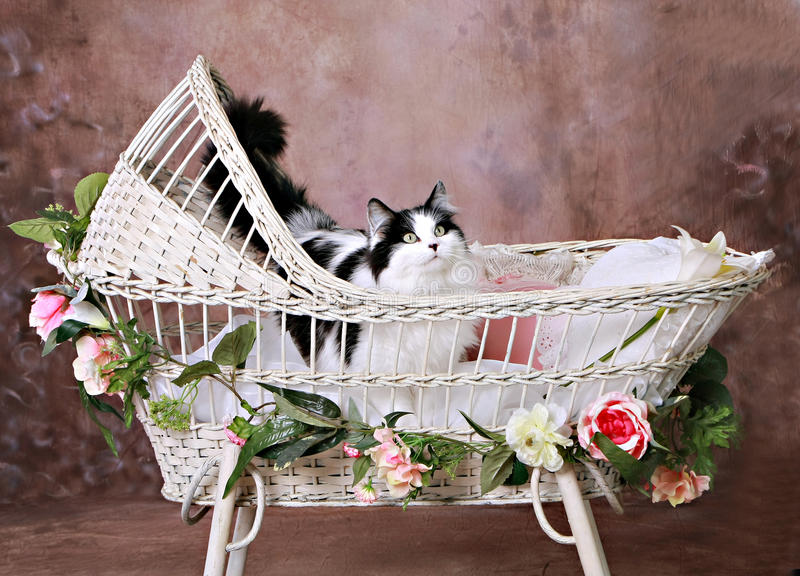 Kitty in Antique Wicker Baby Bassinet. Cat inside of Antique Wicker Bassinet Photography Digital Prop adorned with flowers stock photos