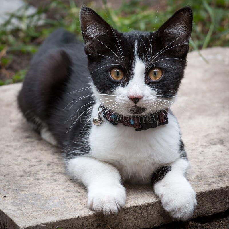 Kitty avec le tintement du carillon sur un collier image stock