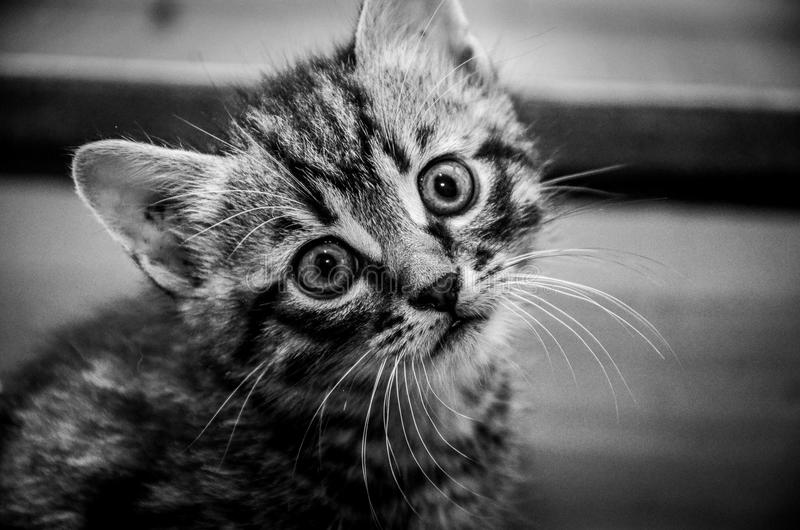 Kitty B immagine stock libera da diritti
