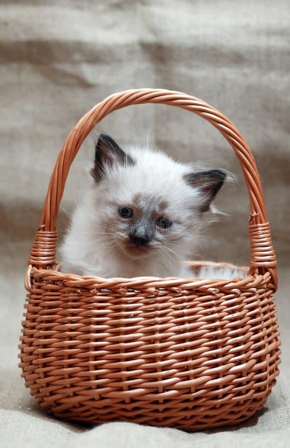 Kitty In Basket royalty-vrije stock afbeeldingen