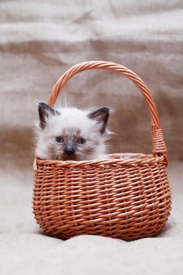 Kitty In Basket stock foto's