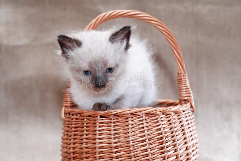 Kitty In Basket stock foto