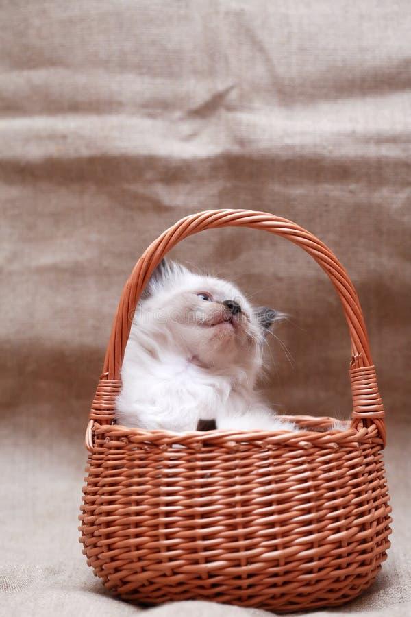 Kitty In Basket royalty-vrije stock fotografie