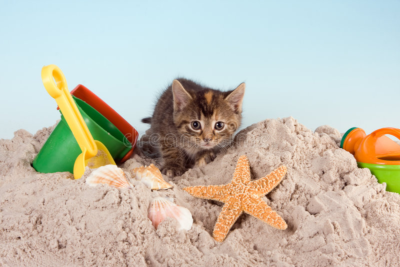 Kitty on a beach stock image