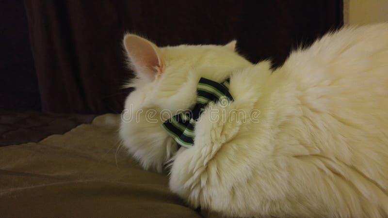 Kitty beau photos libres de droits