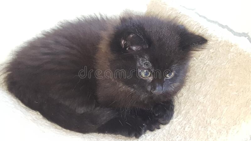 Kitty. Black cat in love royalty free stock photography