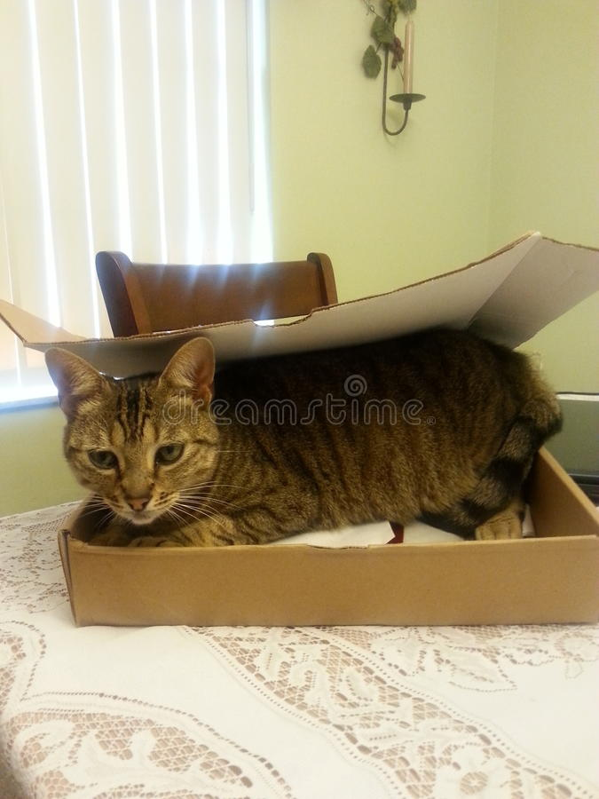 Kitty in the box royalty free stock photos