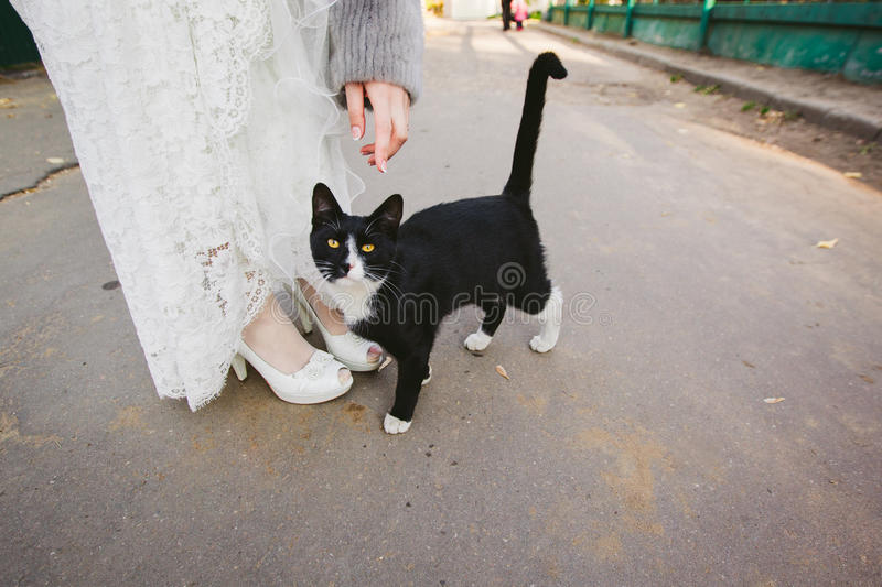 Kitty and bride. royalty free stock photos
