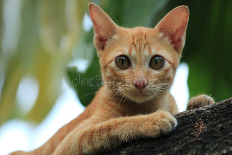 Kitty cat photographie stock