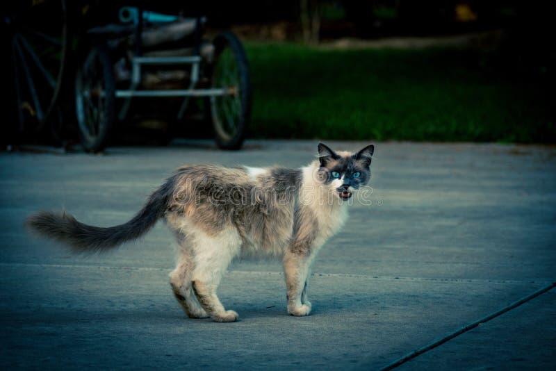 Kitty cat images libres de droits