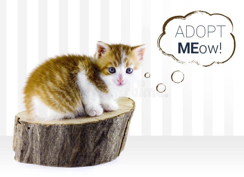 Kitty cat adoption. On white background stock photo