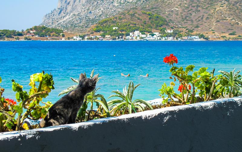 The kitty cat is carefully watching people swimming in the blue sea stock photography