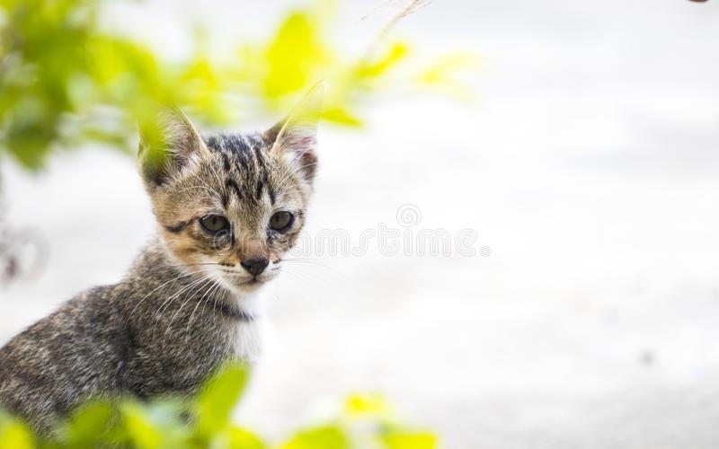 Kitty cat gray color pet animal sitting relax with leaf on background cement floor stock images