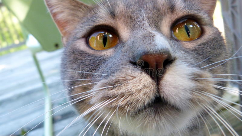 Kitty Cat na plataforma fotografia de stock